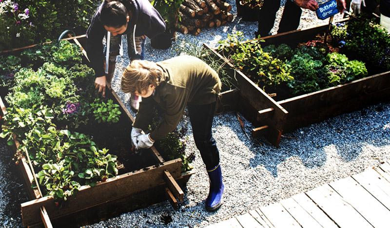 Plantering i trädgård