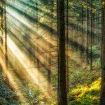 Skogsbild